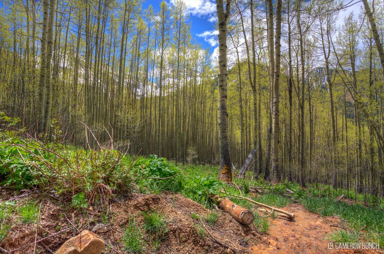 OphirForest
